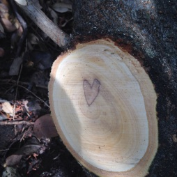 Hearts are everywhere in nature.
